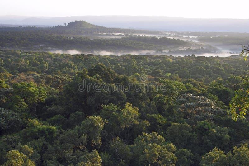 Matin brumeux au-dessus d'une forêt humide. image libre de droits