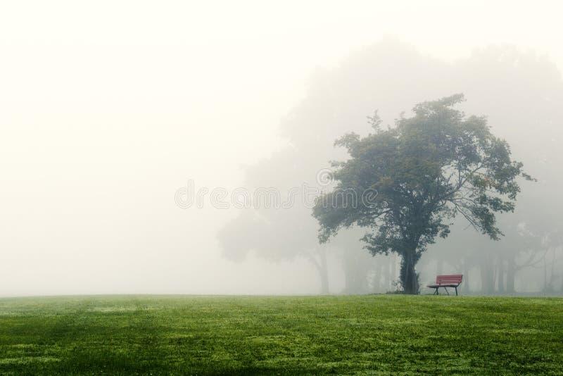 Matin brumeux au-dessus de parc de pays image stock