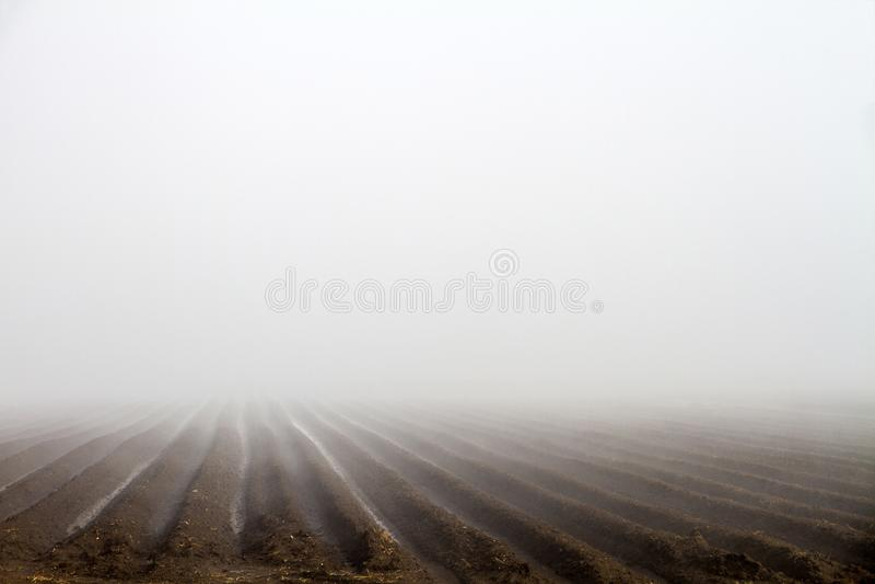 Matin brumeux avec le brouillard blanc au-dessus du champ labouré photographie stock libre de droits