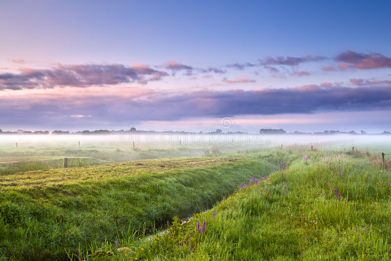 Matin brumeux d'été au-dessus des prés images stock