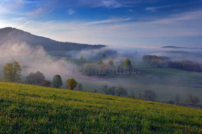 Matin brumeux d'été dans les montagnes Arbre vert sur la colline avec le brouillard Arbre de montagne de Sumava, République Tchèq photographie stock libre de droits