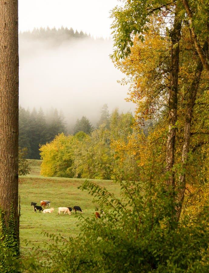 Matin brumeux d'automne image stock