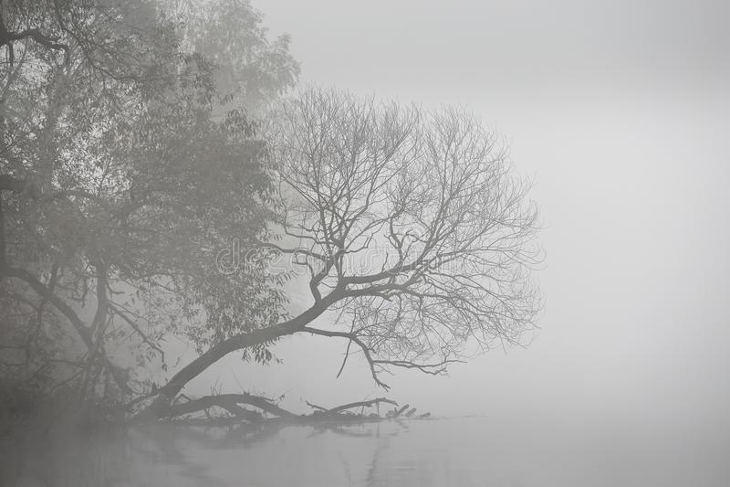 Matin brumeux d'automne Aube sur la rivière brumeuse Pano de scène d'automne photos stock