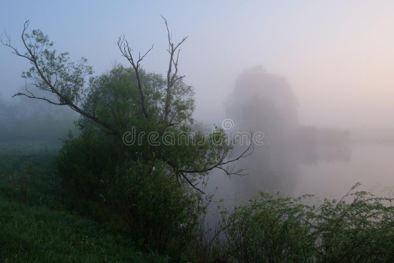 Matin brumeux d'?t? Aube en dehors de la ville Pr?s du lac photo libre de droits