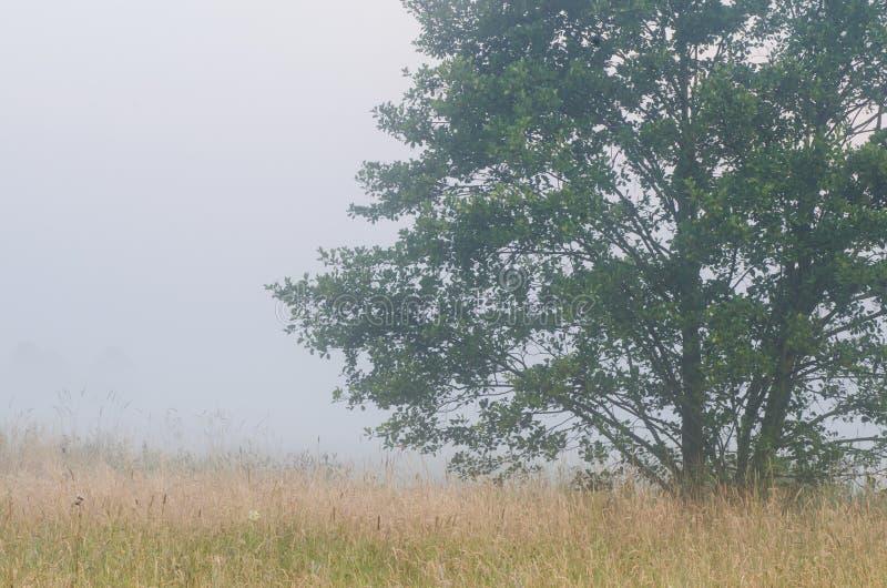 Download Matin Brumeux Dans La Campagne Photo stock - Image du prés, paysage: 56477876