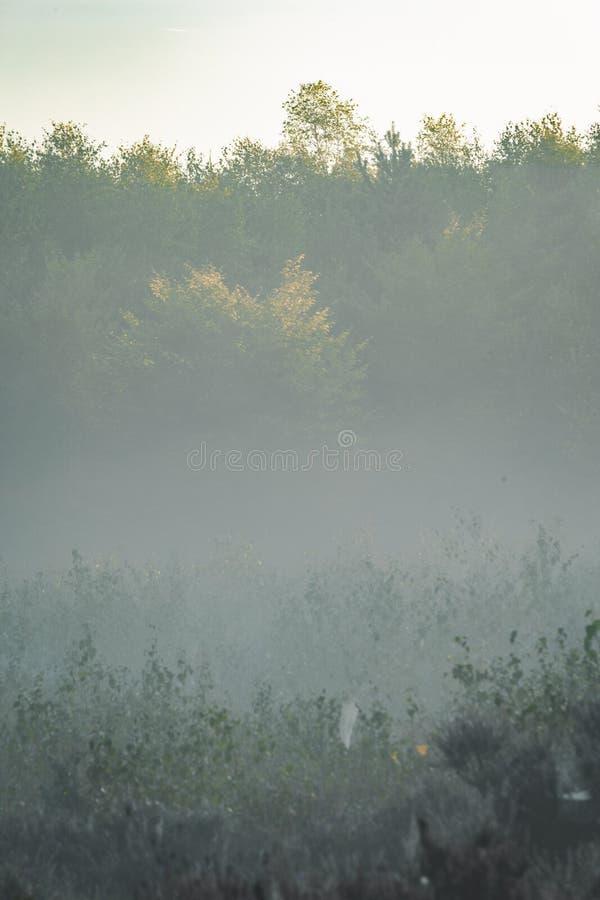 Matin brumeux dans le Bos d'Amerongse avec les arbres éloignés à peine évidents image stock
