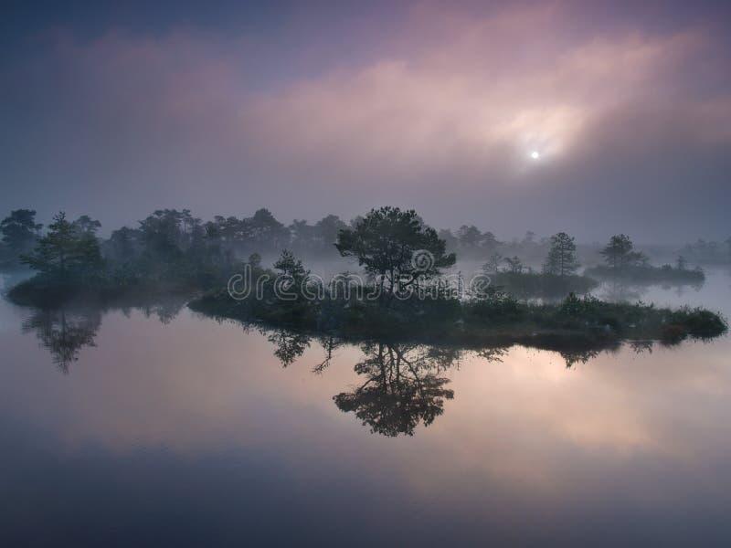 Matin brumeux dans le marais images libres de droits