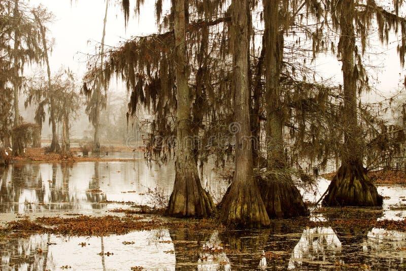 Matin brumeux dans le marais image stock
