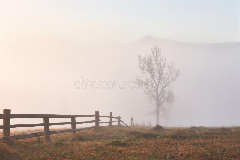 Matin brumeux dans les montagnes carpathiennes ukrainiennes pendant la saison d'automne photographie stock