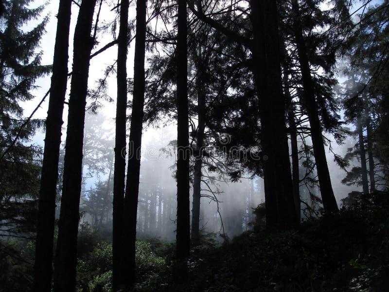 Matin brumeux de forêt brumeuse d'arbres image stock