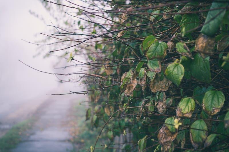 Matin brumeux et pluvieux romantique d'automne photographie stock