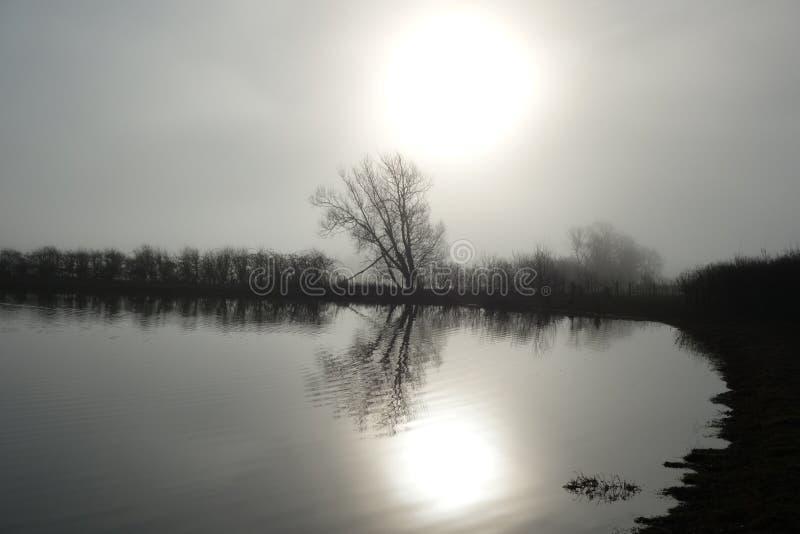 Matin brumeux par un lac photo stock