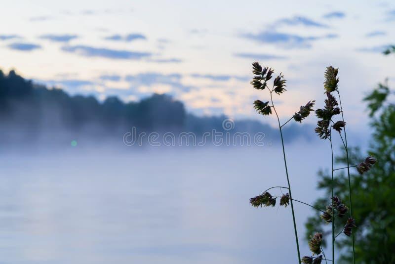 Matin brumeux sur le lac, premiers rayons du soleil Aube magique Silhouettes de forêt et d'herbe côtière Concept des saisons photo libre de droits