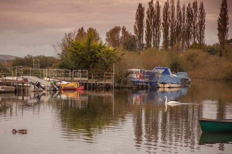 Matin calme sur la rivière avec le canard et le cygne image libre de droits