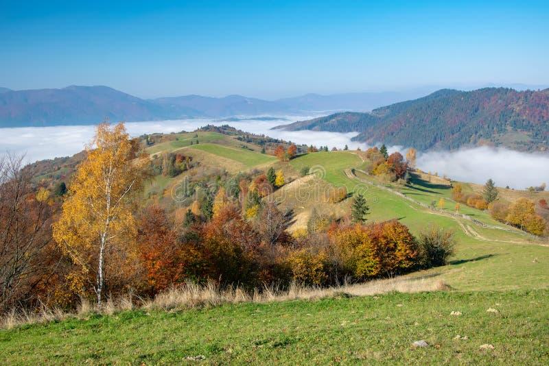 Matin coloré d'automne dans les montagnes carpathiennes photos stock