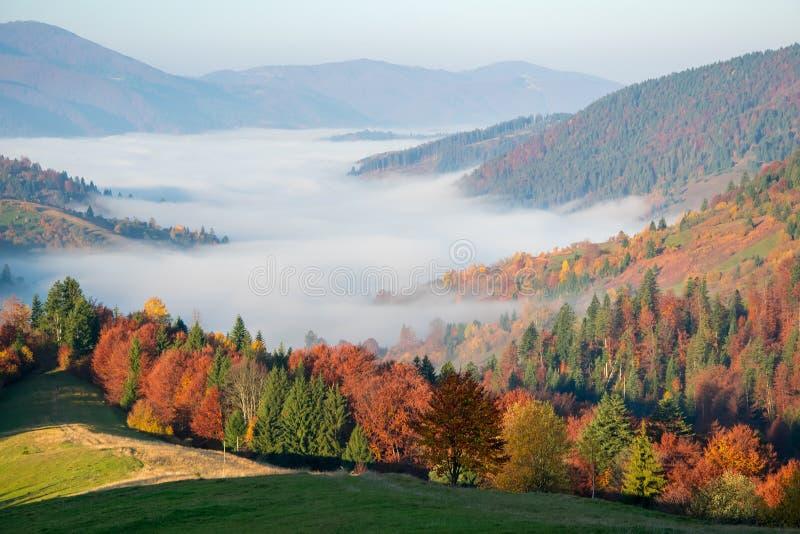 Matin coloré d'automne dans les montagnes carpathiennes image libre de droits