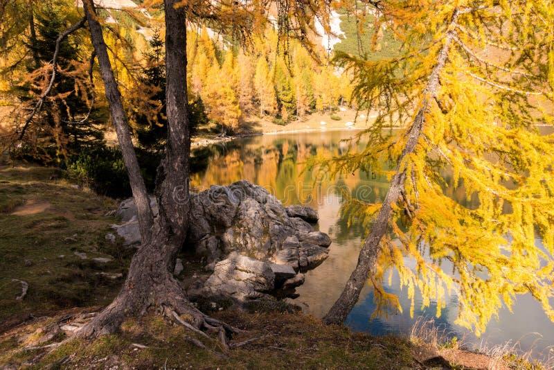 Matin coloré d'automne dans les montagnes Matin coloré d'automne dans le lac de montagne Horizontal coloré d'automne photos libres de droits