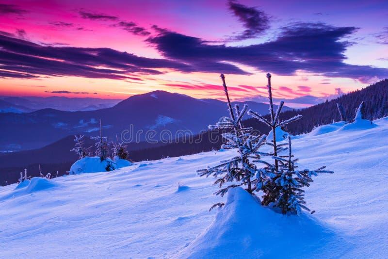 Matin coloré d'hiver dans les montagnes Ciel obscurci excessif Vue des arbres couverts de neige de conifère au lever de soleil Jo images libres de droits