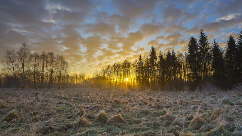 Matin d'hiver avec les usines givrées photos libres de droits