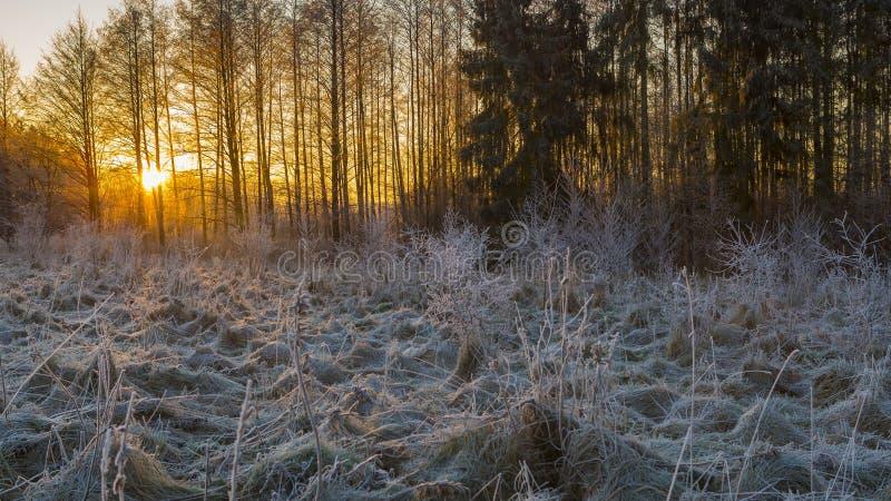 Matin d'hiver avec les usines givrées photos stock
