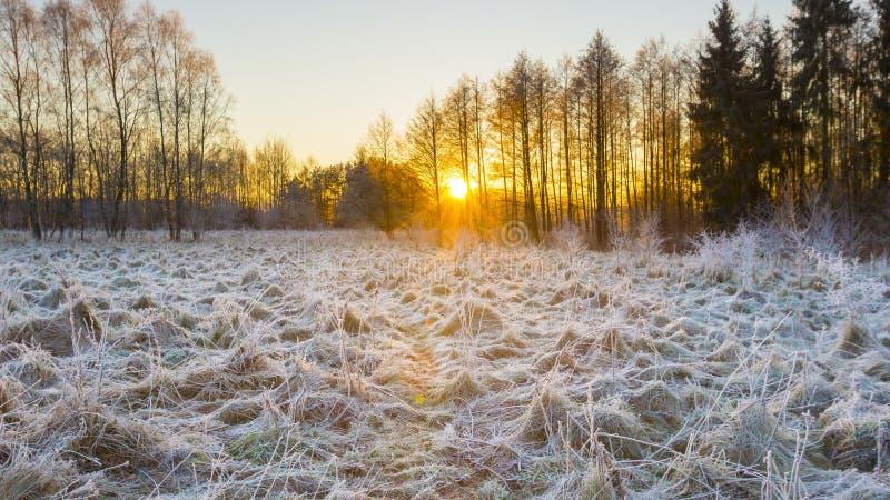 Matin d'hiver avec les usines givrées photographie stock