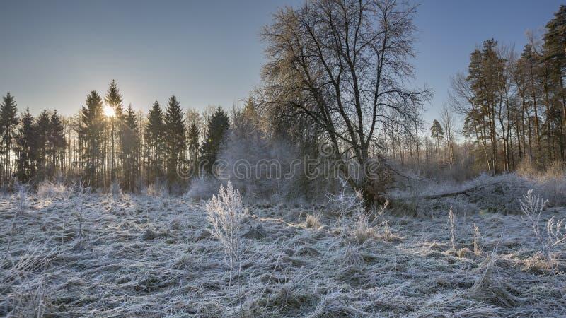Matin d'hiver avec les usines givrées photographie stock libre de droits