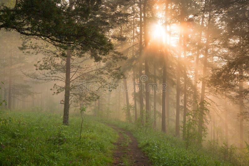 Matin dans la forêt magique photo stock