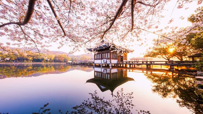 Matin dans Lotus Brise-hérissé au jardin de Quyuan image stock