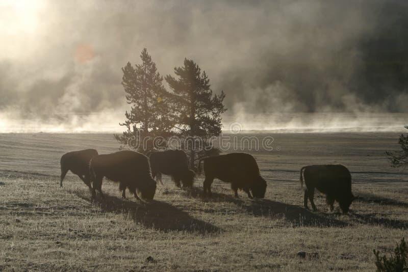 Matin De Buffalo Image libre de droits