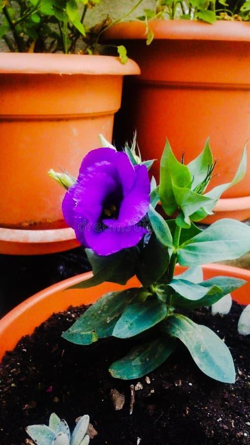 Matin de jardin de maman de fleur images libres de droits