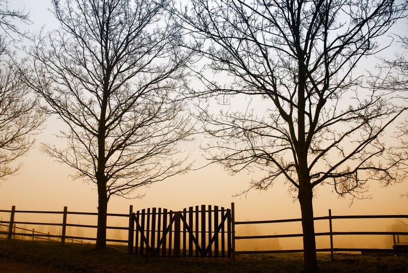Matin de l'hiver photos libres de droits