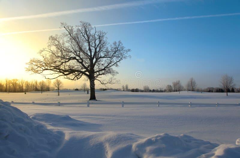 Matin de l'hiver images stock