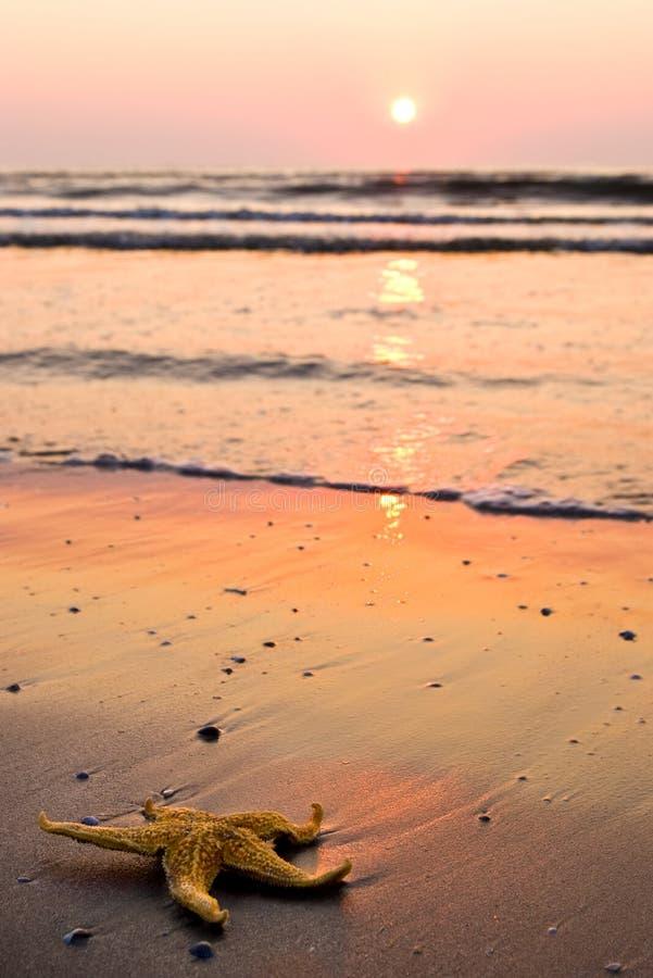 matin de plage images libres de droits