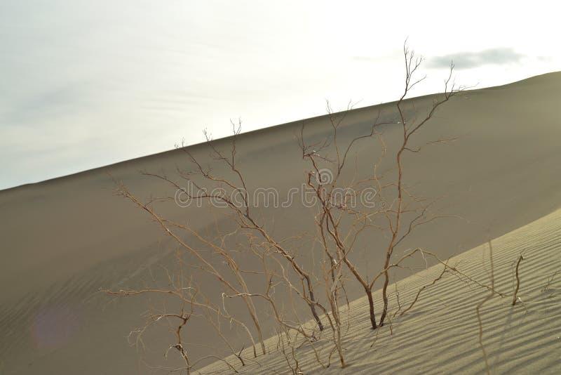 Matin en dunes de sable de mesquite Death Valley photographie stock