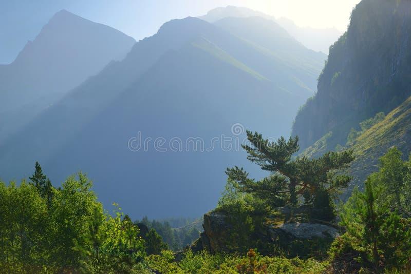 Download Matin en montagnes photo stock. Image du buisson, roche - 76075048
