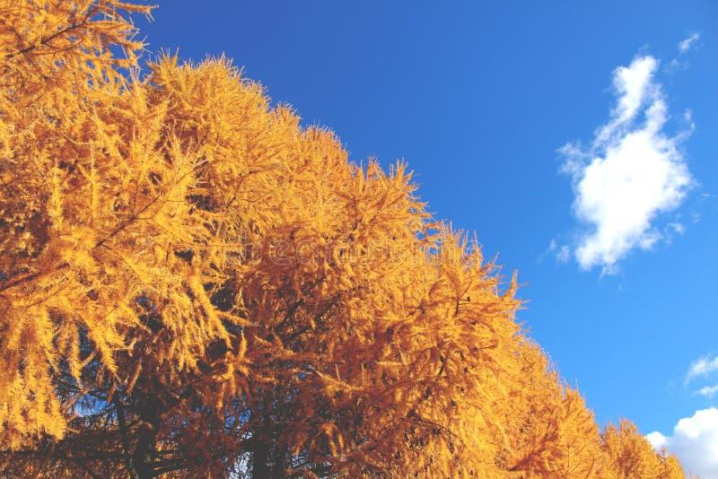 Matin ensoleillé d'automne en Russie 2 photographie stock libre de droits