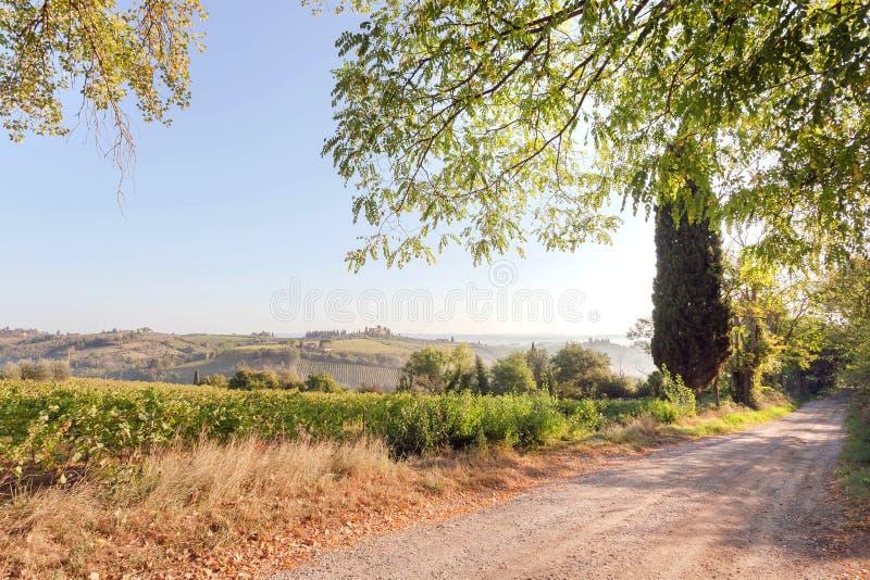 Matin ensoleillé en Toscane rurale Route de campagne au-dessus de vignoble avec les raisins de cuve mûrs en Italie photo stock