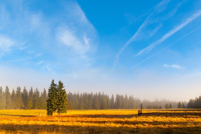 Matin ensoleillé et flou de paysage d'automne avec deux sapins, près de Bozi Dar, montagnes de Krusne, République Tchèque image stock
