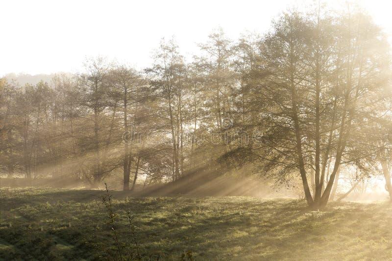 Matin flou, le soleil shinning derrière les arbres dans une petite forêt avec le brouillard Texture visuelle abstraite photographie stock libre de droits