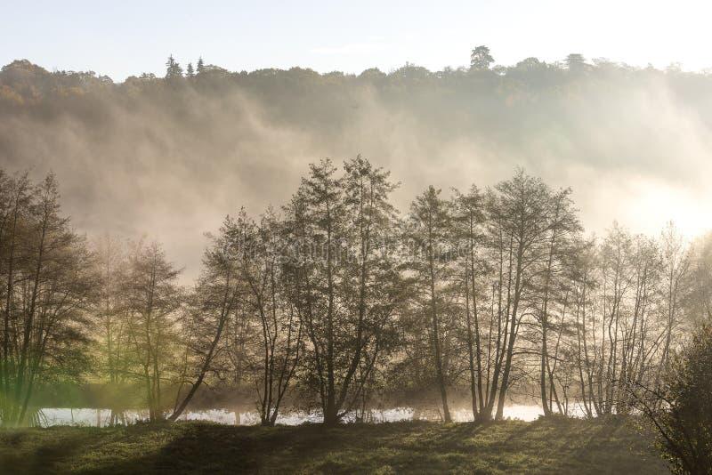 Matin flou, le soleil shinning derrière les arbres dans une petite forêt avec le brouillard Texture visuelle abstraite image stock