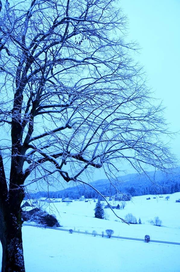 Matin froid photo libre de droits