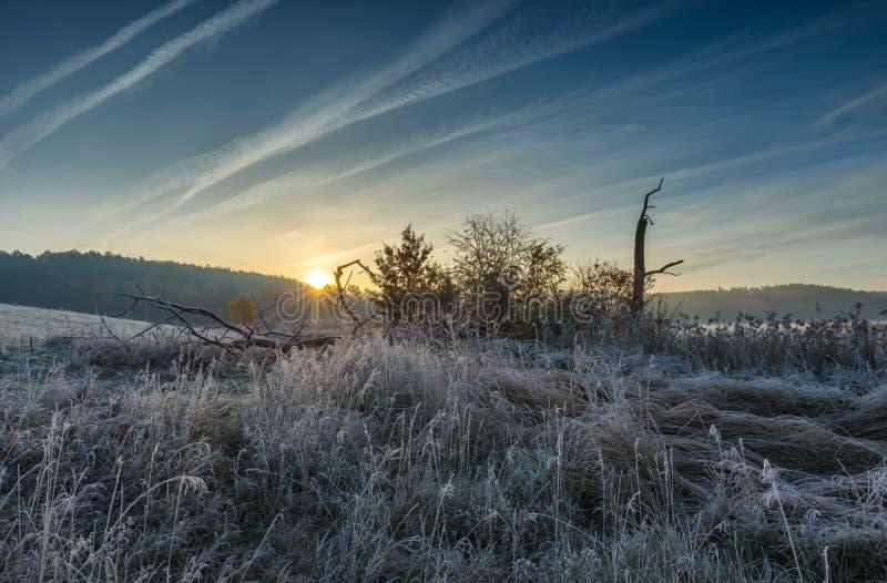 Matin froid automnal sur le pré avec la gelée images stock