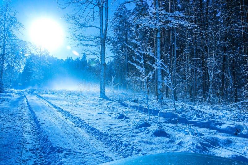 Matin froid d'hiver dans la forêt 2 photos stock