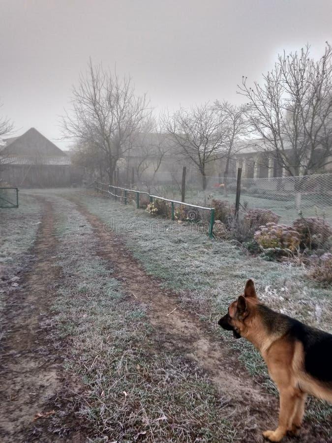 Matin givré avec un chien photographie stock