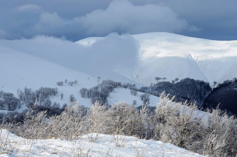 Matin givré d'hiver à la montagne de Gemba, Carpathiens, Ukraine image libre de droits