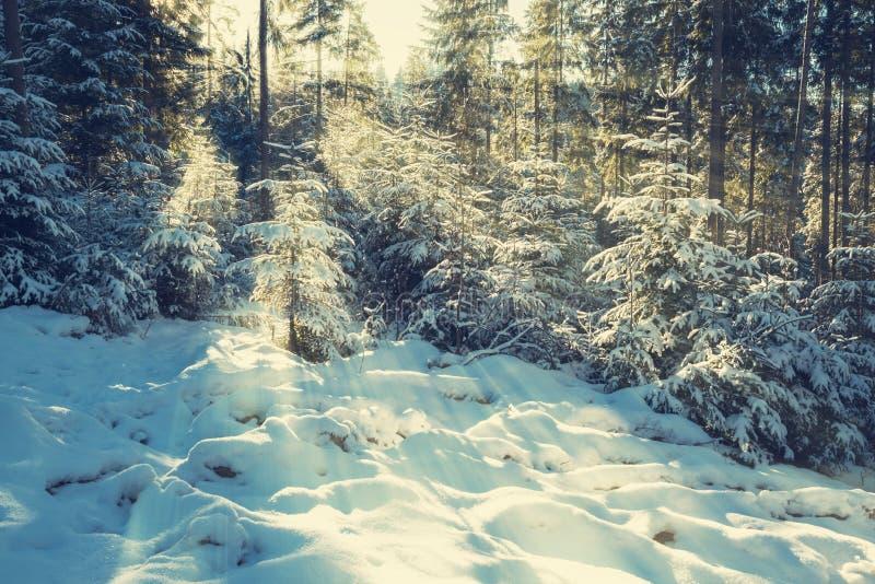 Matin magique d'hiver dans la forêt photographie stock