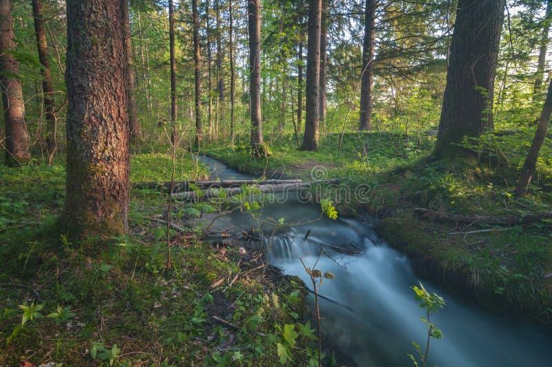 Matin magique dans la forêt images libres de droits