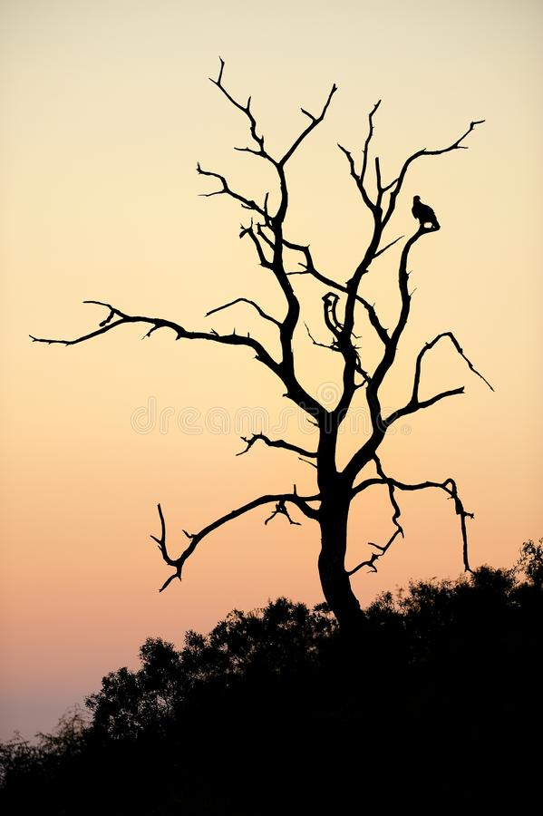 Matin Silhouetter photographie stock