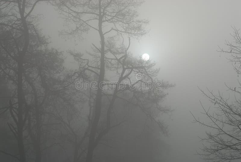 Matin tôt de l'hiver photographie stock libre de droits