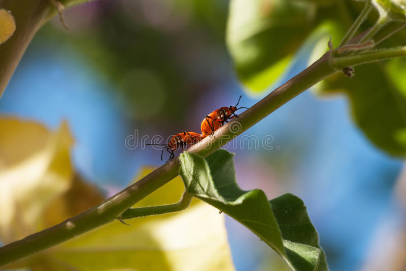 Matine True bugs stock images